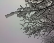 Icy fog at Allegheny Hawk Watch (photo by Kate)