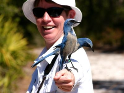 Kate St. John with Florida Scrub-Jays (photo by Chuck Tague)