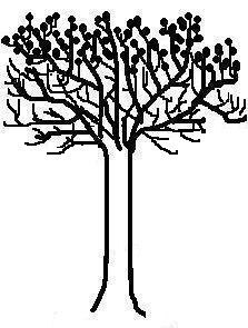 Crow tree (drawing by Kate StJ)