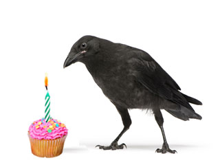 Birdblog is one year old!