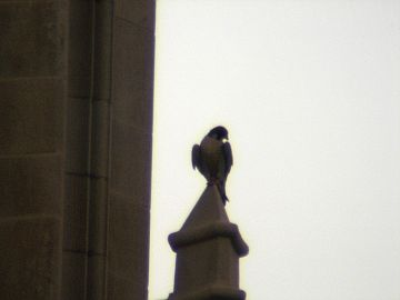 E2 gazes from the Cathedral of Learning, June 2008 (photo by Richard Tourville)