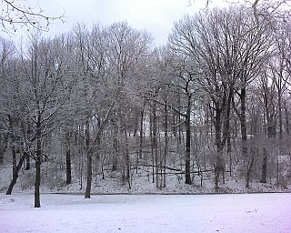 Schenley Park in snow (photo by Kate St. John)