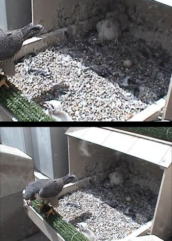 Webcam zoom comparison (photos from National Aviary webcam at University of Pittsburgh)
