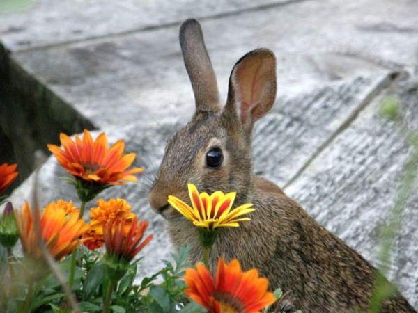 mammals_rabbit_P8130091_mc
