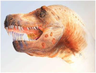 Hypothesized Trichomonas-like infection in T. rex (Illustration by Chris Glen, The University of Queensland from plosone.org)