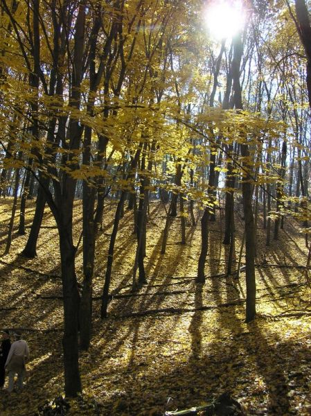Fall leaves at North Park (photo by Dianne Machesney)