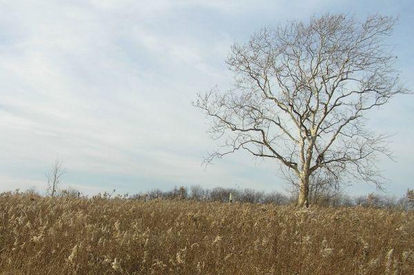 Latodami Field, North Park, 29-Nov-09 (photo by Dianne Machesney)