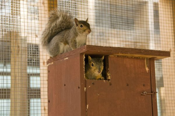 Squirrels at the ARL Wildlife Center (photo from Jill Argall)