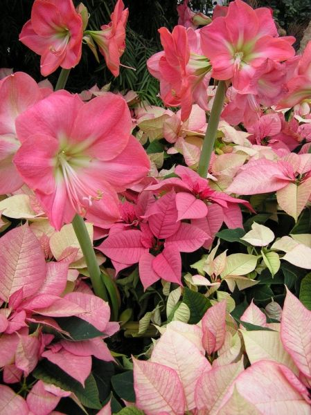 Christmas flower arrangement at Phipps Conservatory (photo by Dianne Machesney)