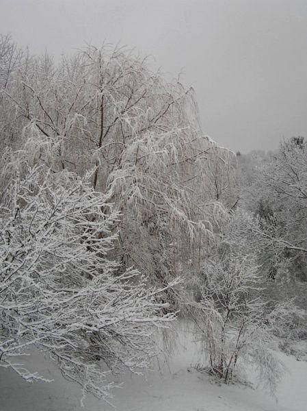 Snow in January (photo by Dianne Machesney)