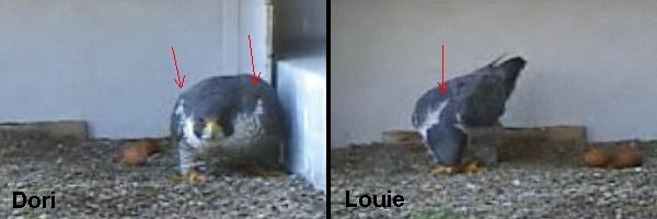 Side by side comparison: Dori and Louie at the Gulf Tower, spring 2010
