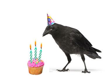 Happy Birthday Blog Outside My Window