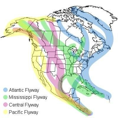 Migration flyways map from Melissa Mayntz at The Spruce