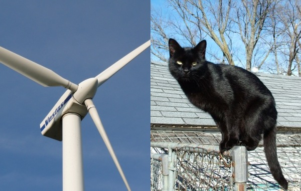 Windmill and Cat named Lilith (photos from Wikimedia Commons)