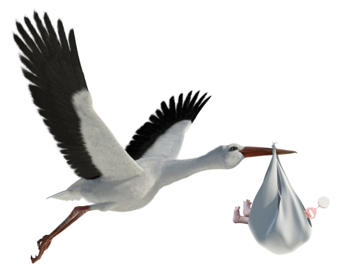 White stork carrying baby (image from Shutterstock)