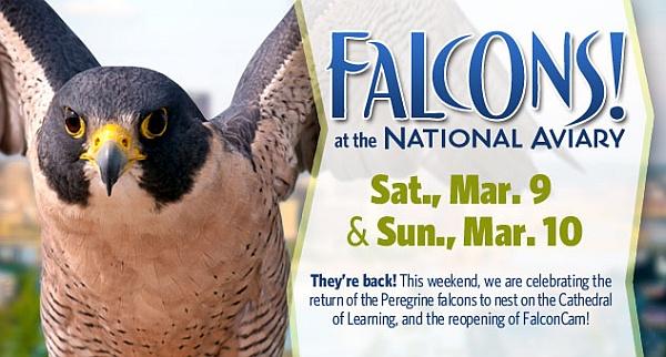Aviary promo, March 9, 2013
