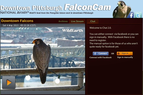 Downtown Pittsburgh Peregrines website at the National Aviary