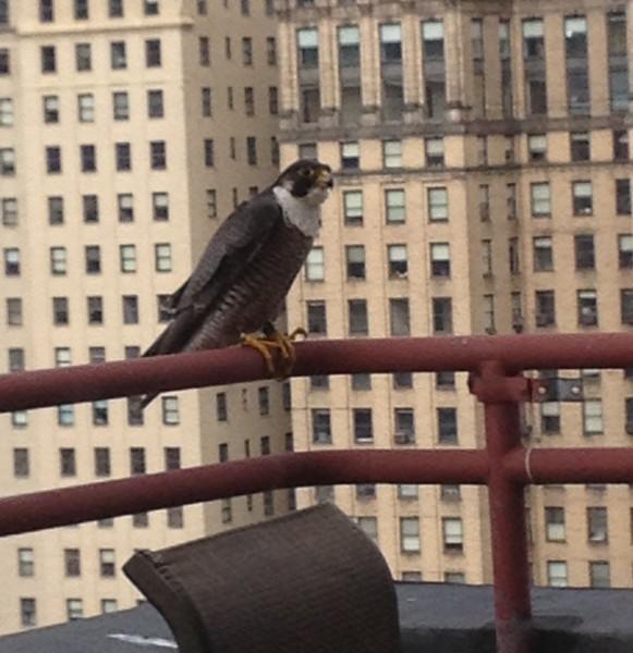 dori on the balcony (photo by Matthew Richardson)