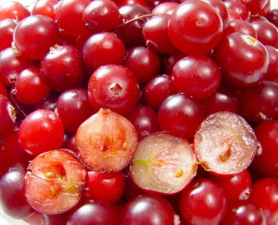 Cranberries (photo from Wikimedia Commons)