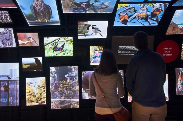 Canary's Call exhibit (photo courtesy of the National Aviary)