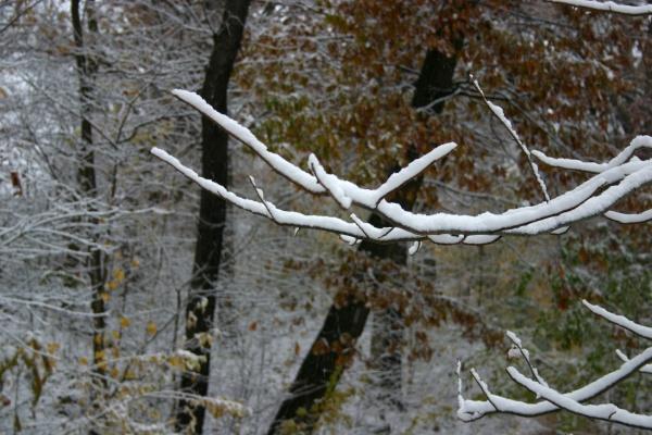 First snow in Schenley Park, 12 Nov 2013 (photo by Kate St. John)