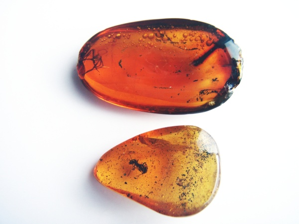 Spider and ant fossilized in amber (photo from WIkimedia Commons)