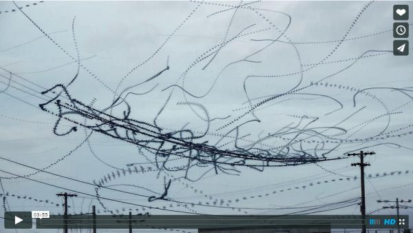 Starling flight-path video by Dennis Hlynsky on Vimeo