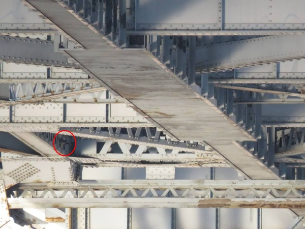 Peregrine looking inside a hole on the McKees Rocks Bridge, 31 March 2014 (photo by Leslie Ferree)