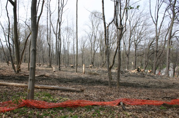 Schenley Park clearcut to stop oak wilt (photo by Kate St. John)