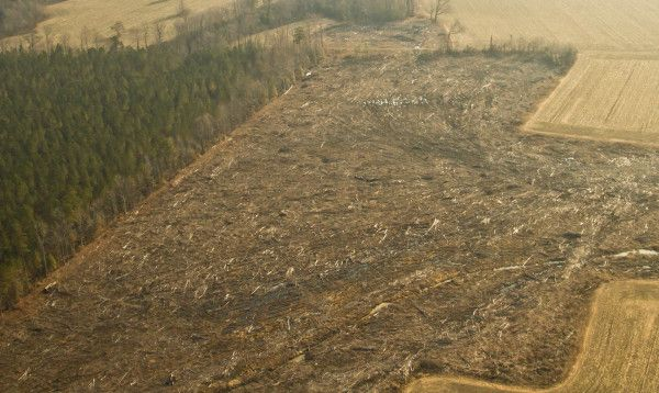 Aerial photo of clearcut from CCB bald eagle survey (photo from Center for Conservation Biology)