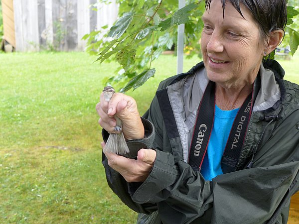Marcy Cunkelman, ready to release a banded red-eyed vireo, 19 July 2014 (photo by Kate St. John)