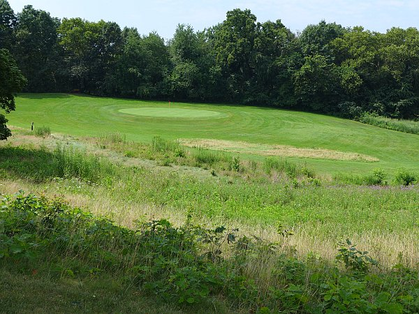 Schenley Park Golf Course, the rough is rough (photo by Kate St. John)