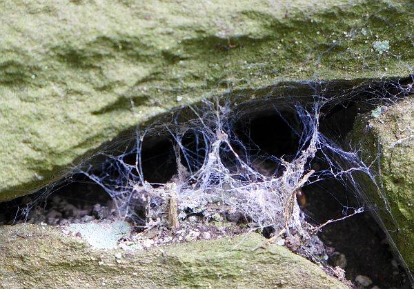 Webs between the rocks, Schenley Park (photo by Kate St. John)