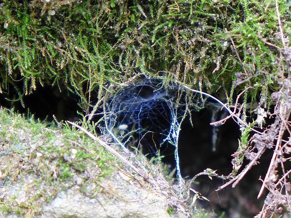 Web between the rocks (photo by Kate St. John)