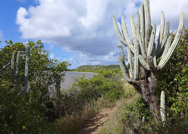 Salt Pond Trail, St. John, U.S. Virgin Islands (photo by Kate St. John)