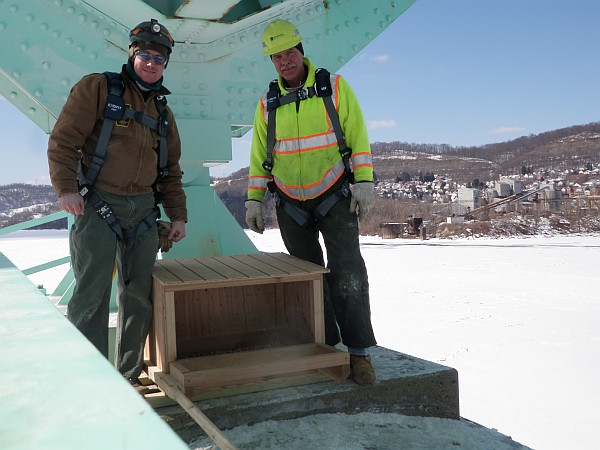 Tom Keller, PGC, and PennDOT worker District 11 next to new peregrine nestbox on the Tarentum Bridge (photo from Tom Keller)
