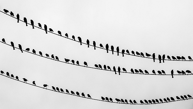 Birds on wire (photo from Wikimedia Commons)