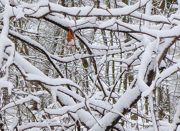 Snow in Schenley Park, 5 Mar 2015 (photo by Kate St. John)