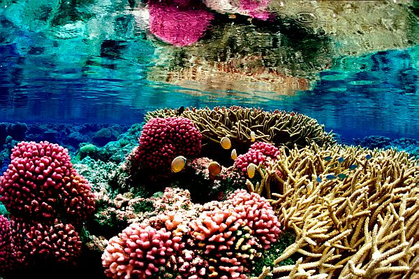Coral reef at Palmyra Atoll (photo by Jim Maragos/U.S. Fish and Wildlife Service)
