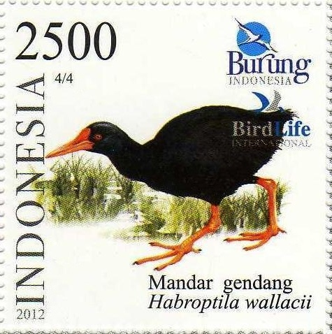 The Invisible Rail on an Indonesian postage stamp (image from Wikimedia Commons)