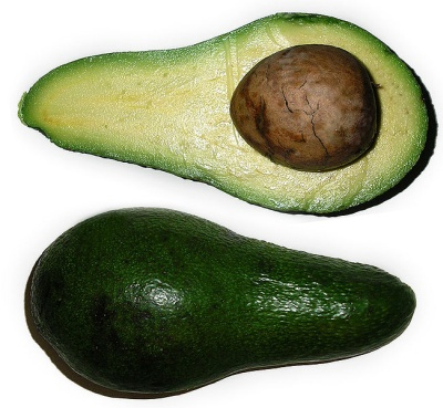 Open avocado showing huge seed (photo from Wikimedia Commons)