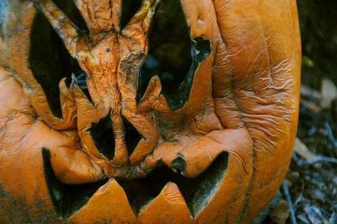 Carved pumpkin, rotting (photo from Wikimedia Commons)
