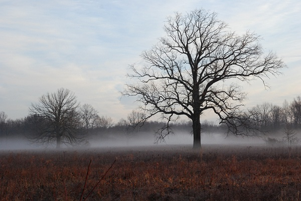 Misty Morning at Great Swamp National Wildlife Refuge (photo by Billtacular via Flickr Creative Commons license)
