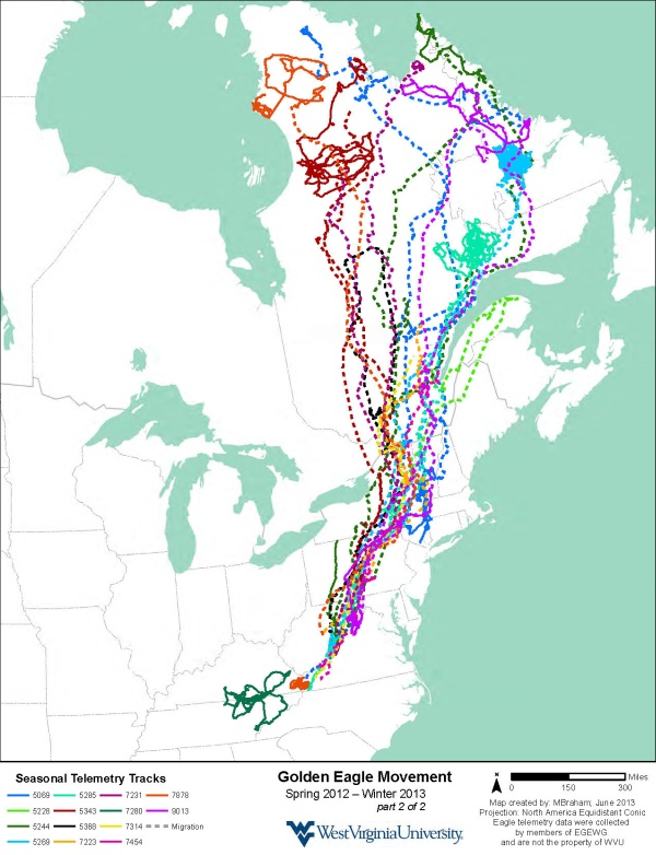 Golden eagle movements in eastern North America, satellite telemetry, Spring 2012-Winter 2013, part 2 (map courtesy of Katzner Lab)