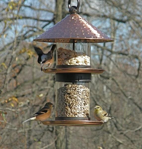 Birds at Marcy's feeder (photo by Marcy Cunkelman)