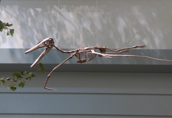 Pterosaur skeleton, main exhibit, Carnegie Museum of Natural History (photo by Kate St. John)