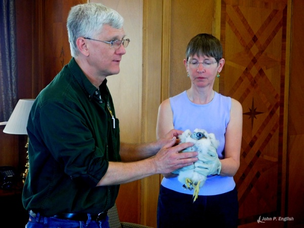 Dan Brauning explains the banding procedure while Kate St. John holds the chick, C1 (photo by John English)