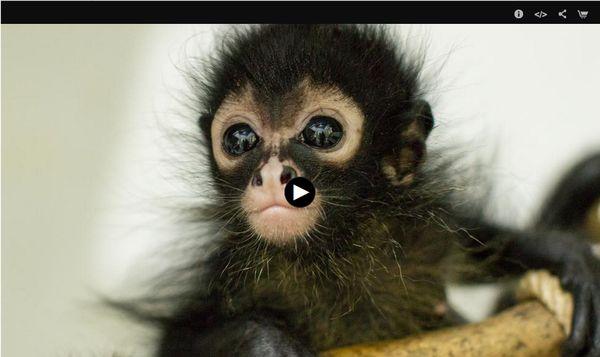 JUngle Animal Hospital on PBS NATURE
