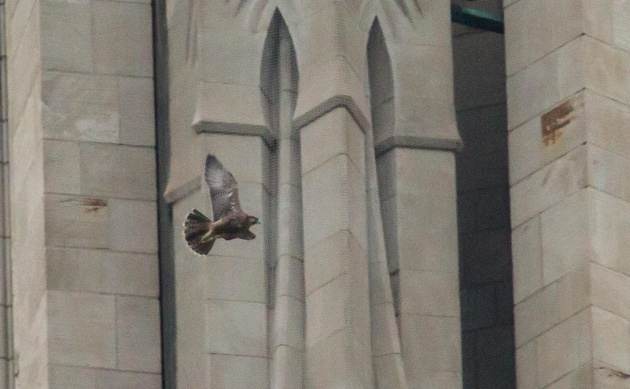C1 flies around the corner of the Cathedral of Learning, 15 June 2016 (photo by Peter Bell)