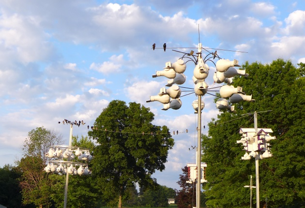 Purple martin houses at Bob Allnock's (photo by Kate St. John)